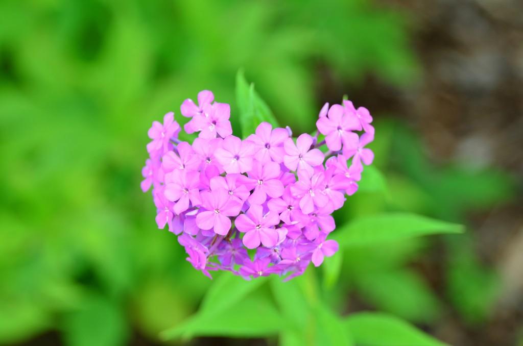 photo101, flowers, color